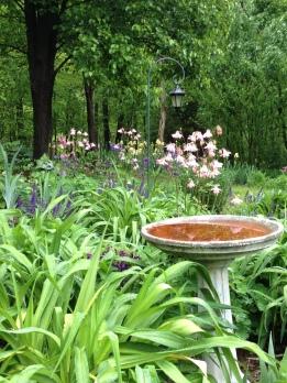 Spring Garden in my Back Yard!