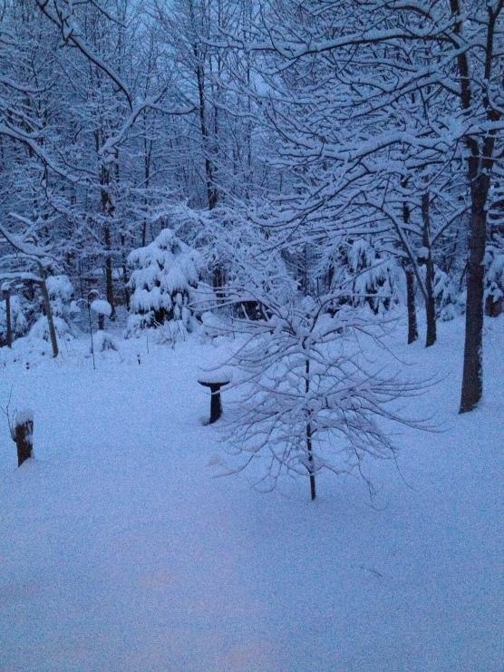 Spring Storm in Virginia